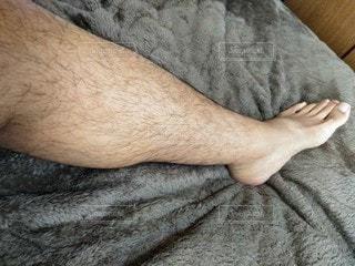 左足の体毛の写真・画像素材[2712674]