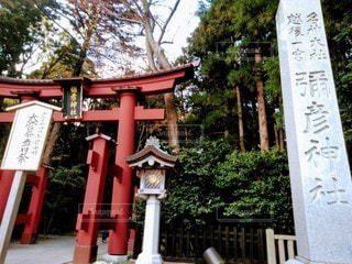 弥彦神社鳥居の写真・画像素材[2722520]