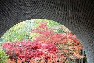 トンネルからの秋の紅葉の写真・画像素材[3904416]