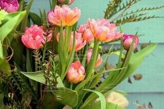 ピンクのチューリップの写真・画像素材[4261946]