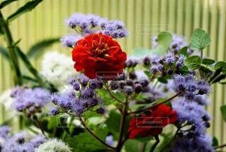 たくさんの花々の写真・画像素材[4843126]