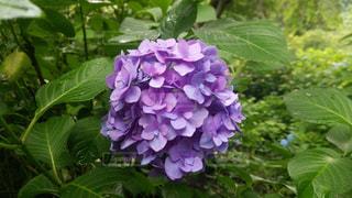 花の写真・画像素材[2613581]