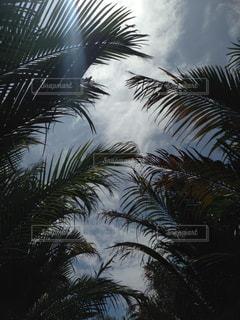 ベトナムの空の写真・画像素材[2669013]