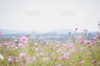 野原の色とりどりの花群の写真・画像素材[2701066]