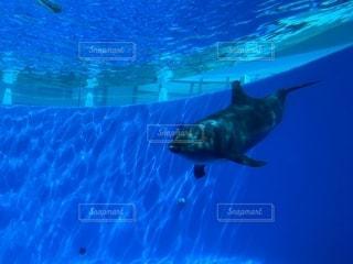 優雅に泳ぐイルカの写真・画像素材[2620274]