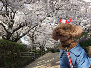 犬の写真・画像素材[2630903]