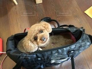 犬の写真・画像素材[2659979]