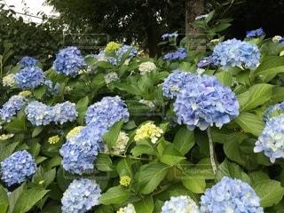 花の写真・画像素材[2660021]