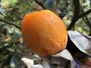 オレンジの木のクローズアップの写真・画像素材[2686833]