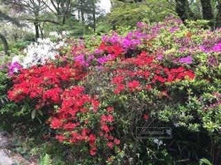 花のある風景の写真・画像素材[2621096]