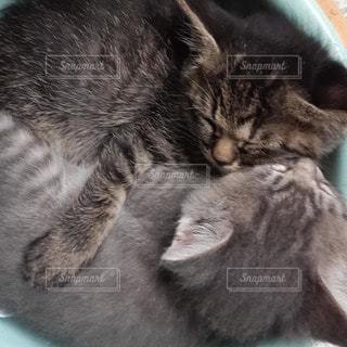 なかよし子猫の写真・画像素材[2603707]
