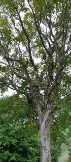 庭木の写真・画像素材[2603947]