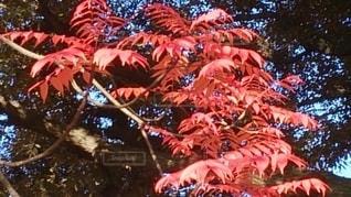 REDの写真・画像素材[2602912]