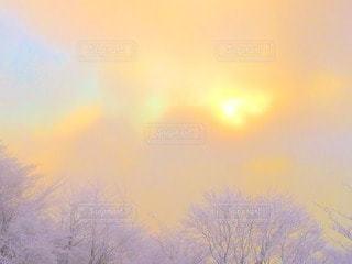 冬山の写真・画像素材[101005]