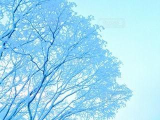 冬山の写真・画像素材[103349]