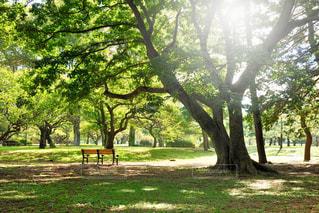 公園の写真・画像素材[474280]
