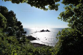 真鶴岬の写真・画像素材[481676]