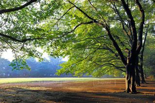 公園の写真・画像素材[488504]