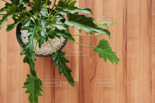 植栽の写真・画像素材[505744]