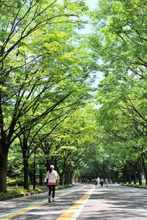 緑の中のジョギングの写真・画像素材[897247]