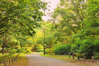 公園の午後の写真・画像素材[984680]