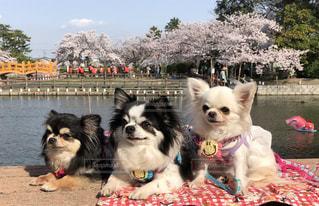 犬の写真・画像素材[2604809]