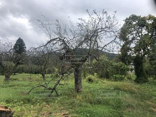 病気の木の写真・画像素材[2610990]