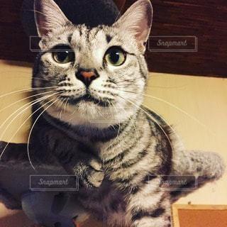 猫の写真・画像素材[109766]