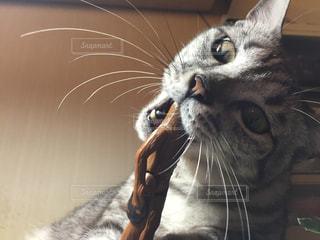 猫の写真・画像素材[214788]