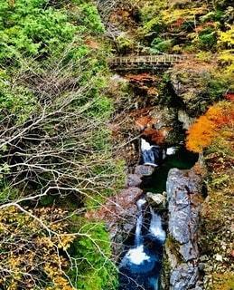 みたらい渓谷の写真・画像素材[2621741]