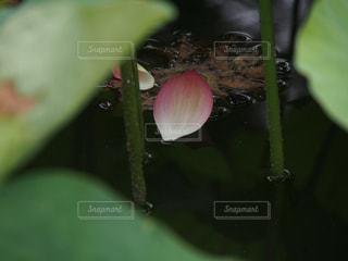 花の写真・画像素材[157683]