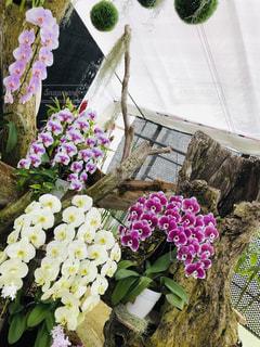 お花の写真・画像素材[2615717]