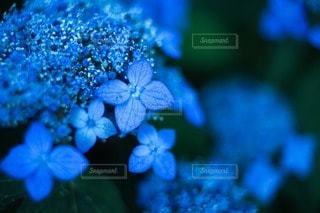 花の写真・画像素材[116132]