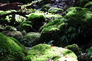 苔むす森5の写真・画像素材[2606112]