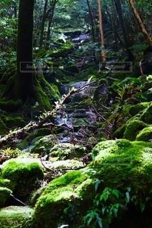 苔むす森3の写真・画像素材[2606118]