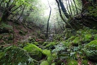 もののけ姫の森1の写真・画像素材[2607215]