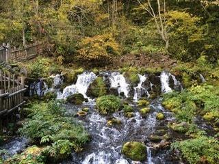 自然の写真・画像素材[101505]