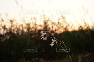 枯れた花の写真・画像素材[3812418]