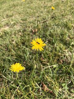花の写真・画像素材[2634752]