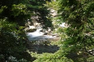自然の写真・画像素材[2607505]