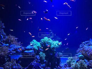 魚の写真・画像素材[2609714]