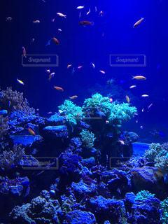 魚の写真・画像素材[2609715]
