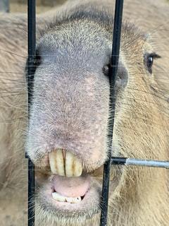 動物の写真・画像素材[2610470]