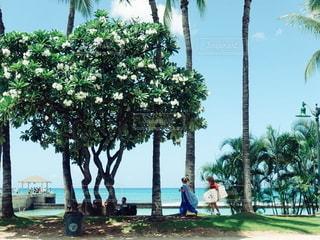 ハワイの写真・画像素材[2610057]