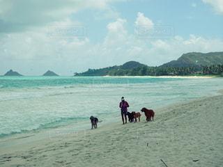 ハワイの写真・画像素材[2610051]