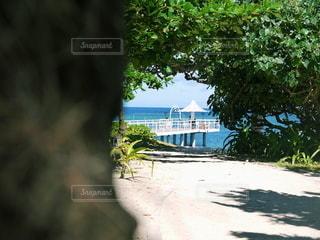 沖縄 石垣島の写真・画像素材[2612526]