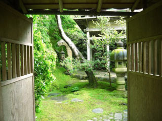 京都 お寺 庭 苔の写真・画像素材[2615056]