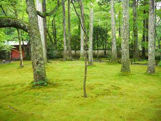 京都 三千院 苔 庭の写真・画像素材[2615072]