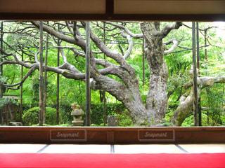 京都 宝泉寺 お寺 縁側の写真・画像素材[2615101]