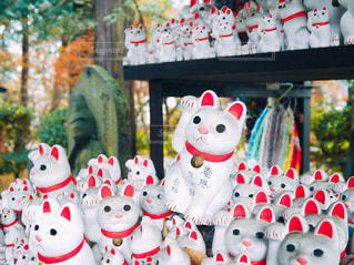 日本 東京 豪徳寺の写真・画像素材[2615128]